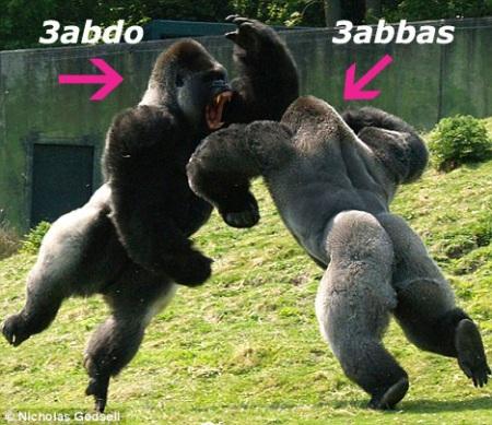 3abbas o 3abdo