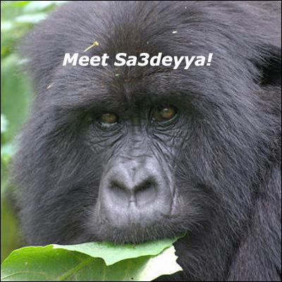 gorillafemale